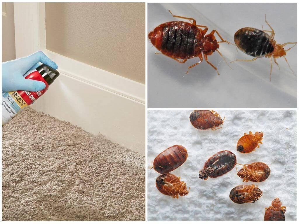 Как подготовить квартиру к дезинсекции от клопов
