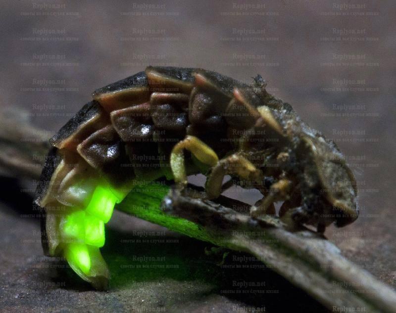 Сказки про червячков