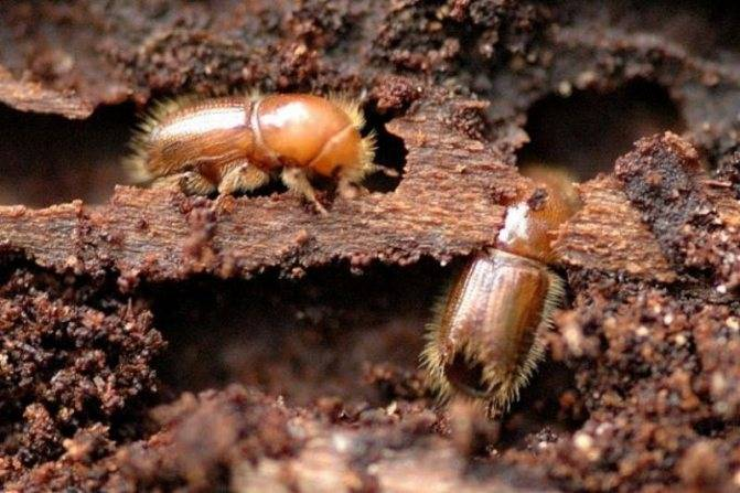 Как избавиться от муравьев с помощью уксуса