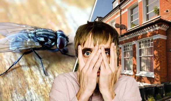 Мухи осы