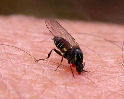 Аллергия на укус мошки: причины, признаки, методы лечения