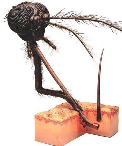 Почему укусы комаров чешутся и опухают - нормальная и аллергическая реакция на слюну насекомого