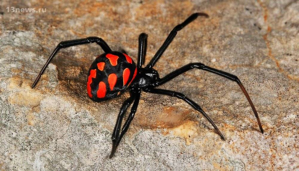 К чему снятся тарантулы