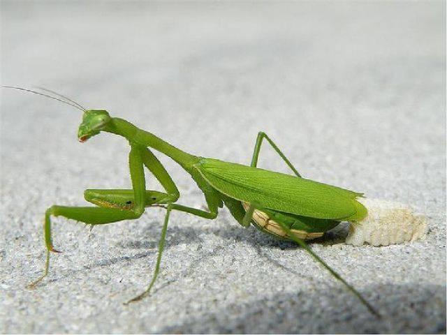 Жужелица – описание видов жука, образ жизни, вред и польза