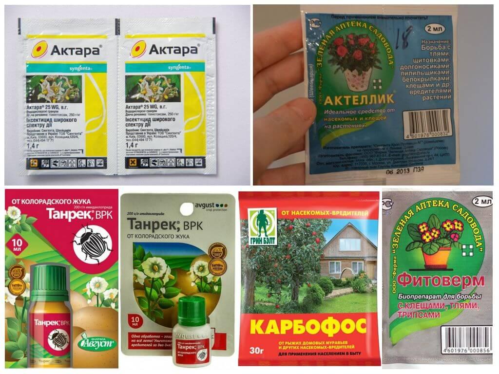 Как бороться с тлей на огороде, чем обрабатывать культуры: препараты и народные средства