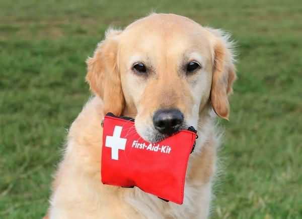 Собаку укусил клещ: что делать, симптомы, первая помощь