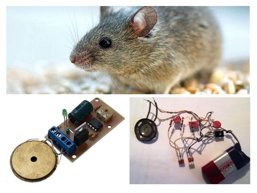 Ультразвуковой отпугиватель крыс и мышей какой лучше