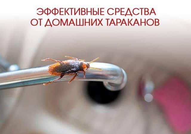 Чем травят тараканов профессионалы