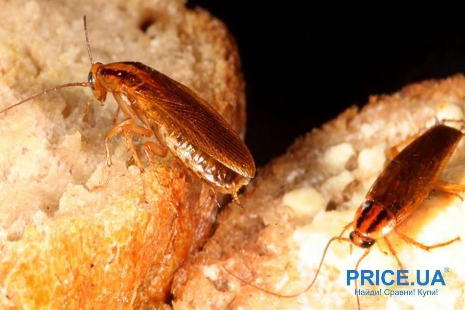 Тараканы в холодильнике — источники аварий и переносчики болезней