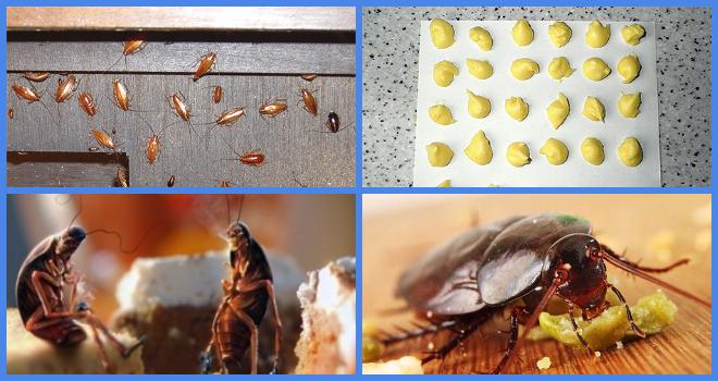 Борная кислота от тараканов: рецепт с яйцом, отзывы, пропорции, инструкция по применению