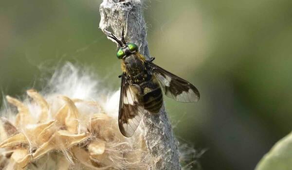 Ядовитые насекомые россии