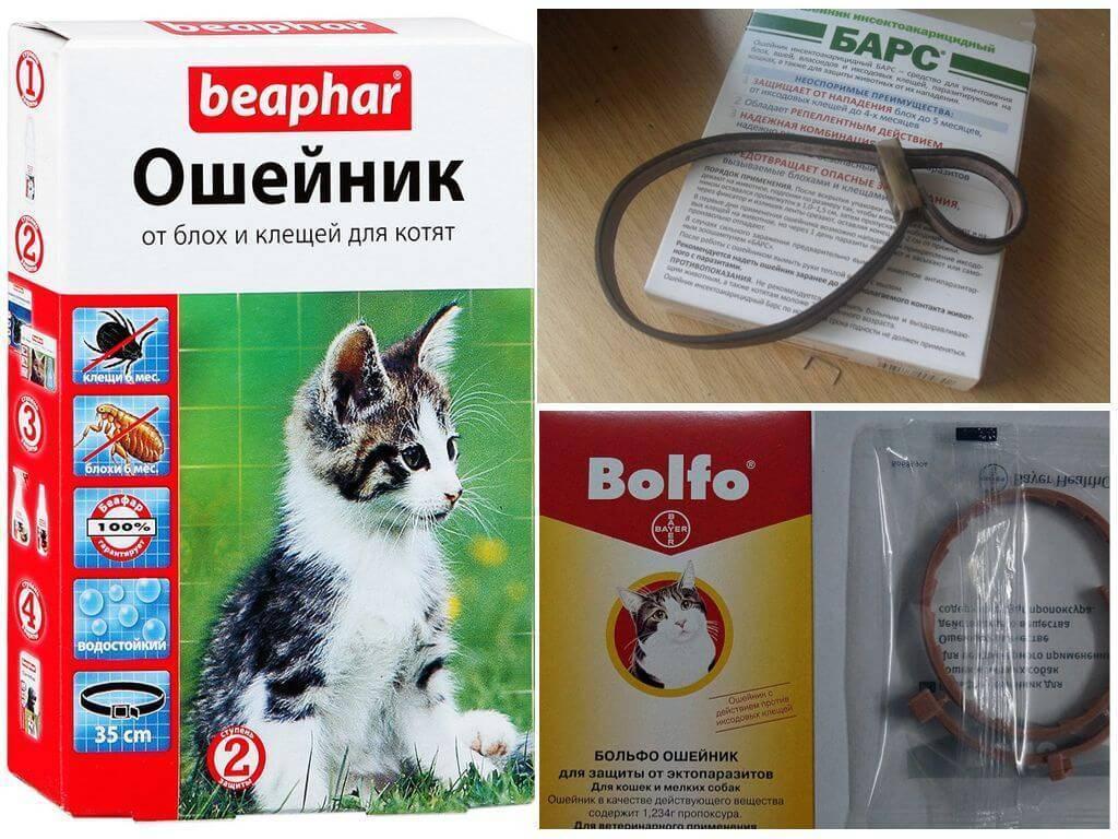 Инструкция и реальные факты, как действует ошейник от блох для кошек