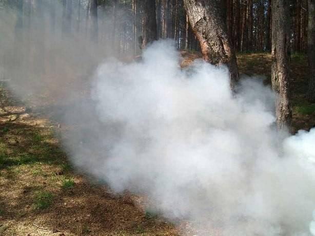 Дымовая шашка от клопов может вас разочаровать!