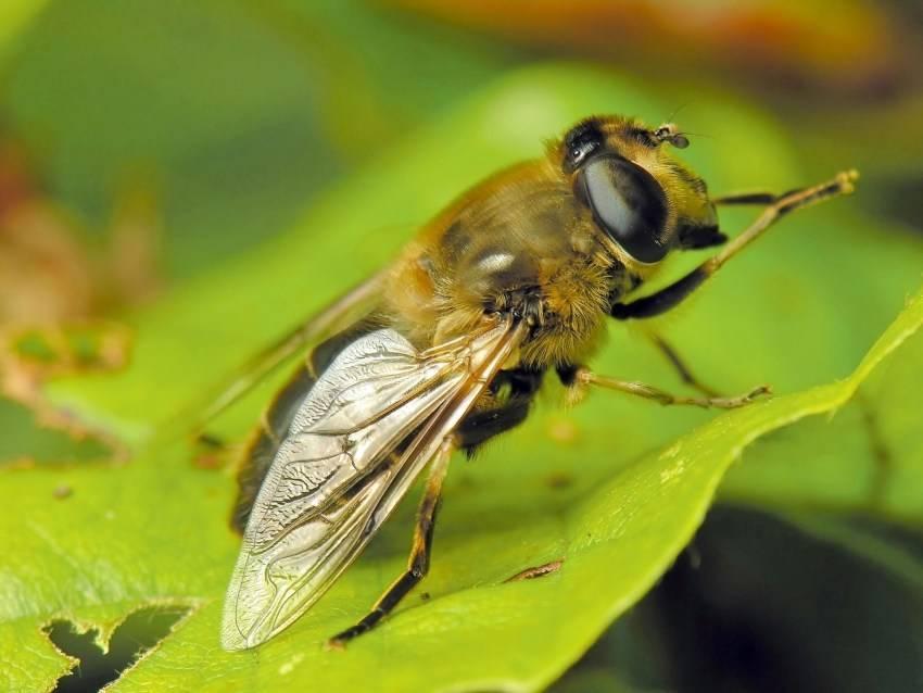 Сколько живут мухи в квартире?