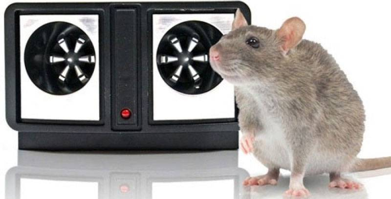 Отпугиватель крыс и мышей. Какой лучше? Отзывы о нескольких видах приборов