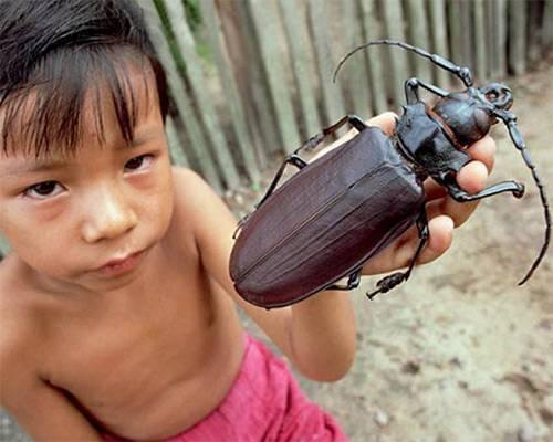 Интересно: кусаются ли тараканы
