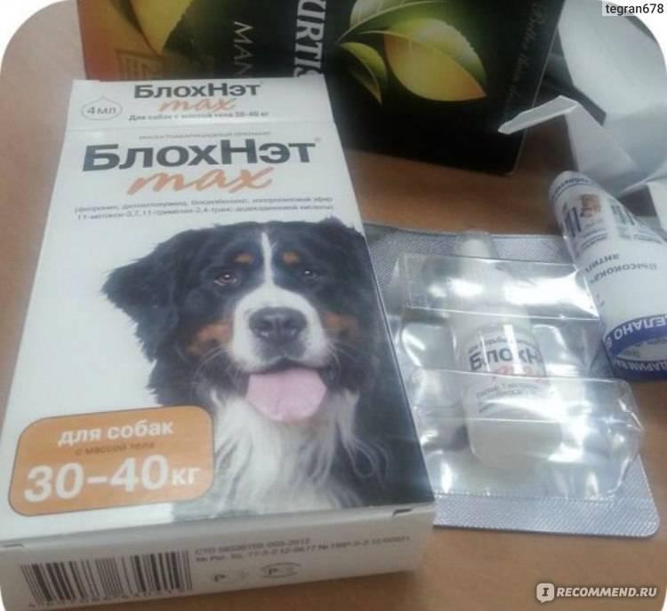 Блохнэт от блох для собак и кошек: инструкция, отзывы покупателей