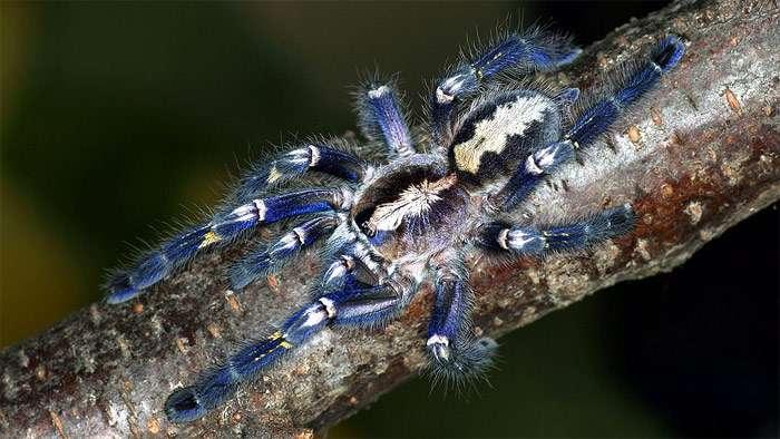 Ученые нашли паука в янтаре. самые удивительные и красивые пауки мира