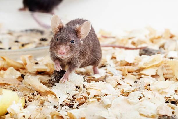 Какой утеплитель не едят крысы и мыши