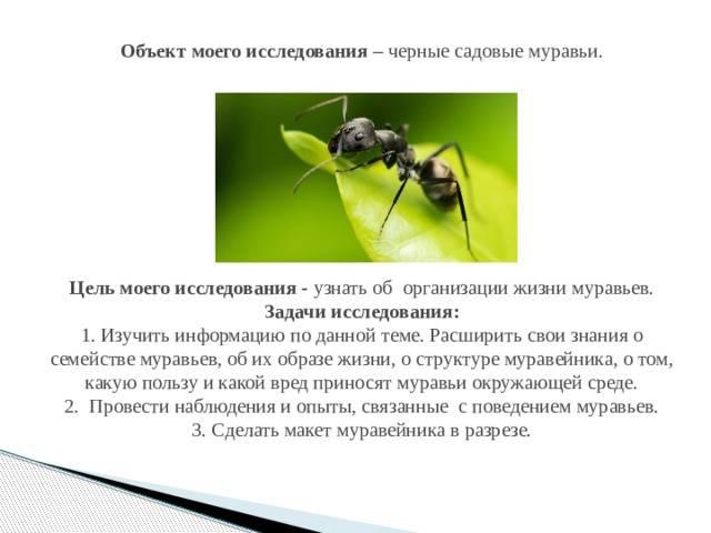 Польза от муравьев