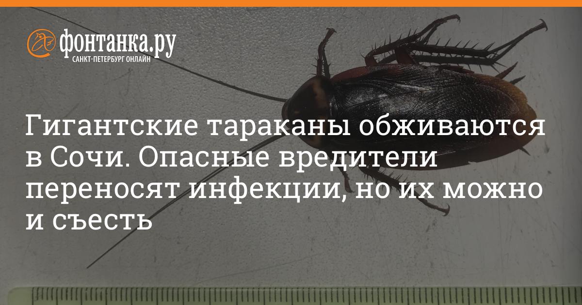 Тараканы - в чем опасность для человеческого здоровья?