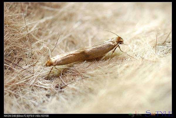 Методы борьбы с личинками моли