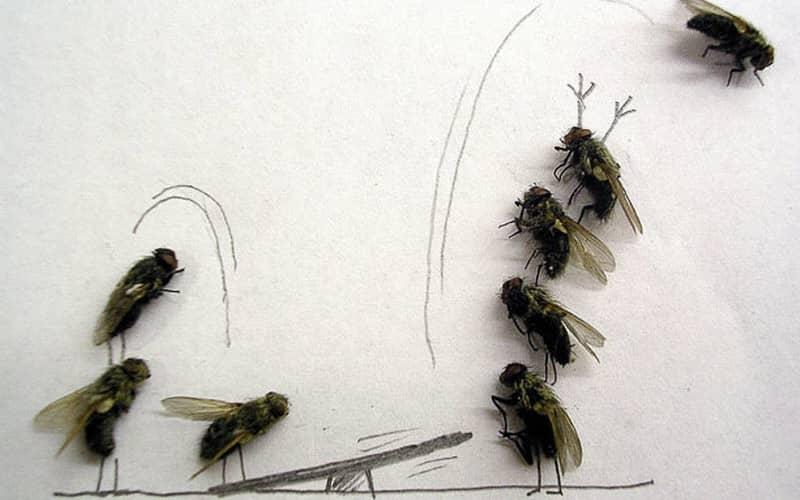 Клейкая лента от мух