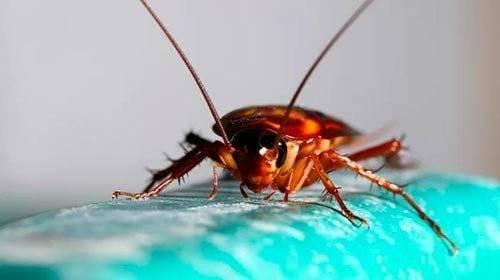Чем отравить муравьев или муравейник