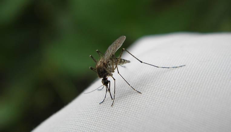 5 эффективных средств, которые на дух не переносят клещи, комары и мошки — без химии