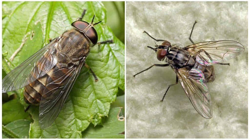 Почему пауки не падают с потолка. как муха садится и держится на потолок. почему муха не падает с потолка