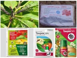 Когда и чем обработать персик от болезней и вредителей