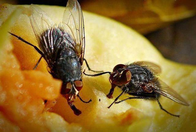 Выбираем лучшее средство от мух для дома, дачи, квартиры, детской