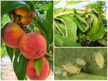 Борьба с короедом — как избавиться и спасти дерево в саду