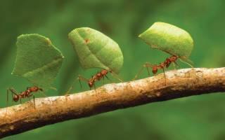 Народные поверья и современные сонники расскажут, к чему снятся муравьи. к чему снятся муравьи человеку