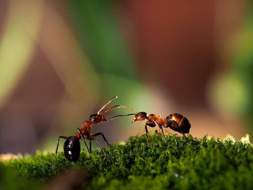 Как бороться с муравьями: самые действенные способы