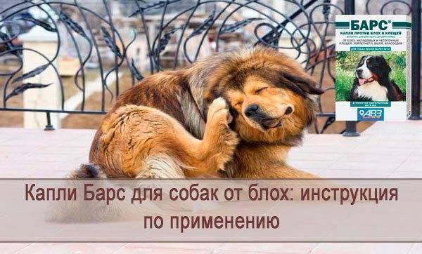 Практик капли для собак от клещей и блох – инструкция по применению, отзывы заводчиков и ветеринаров