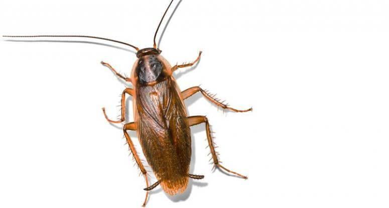 К чему снятся муравьи, большие и черные, видеть во сне много муравьев, ползающих по телу или постели - подробное толкование сна. народные поверья и современные сонники расскажут, к чему снятся муравьи