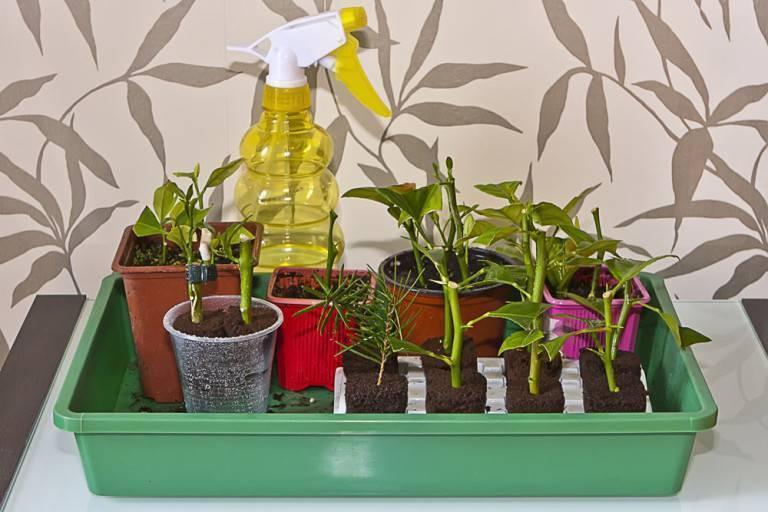 Применение актары для комнатных растений