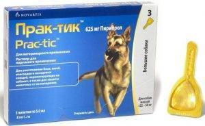 Борьба с блохами собак при помощи инновационного препарата практик