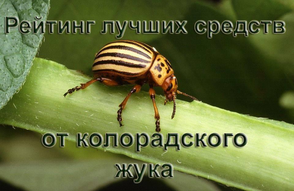 Инструкция по применению препарата престиж от колорадского жука