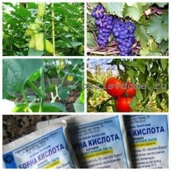 Борная кислота от муравьев в огороде: действие и применение