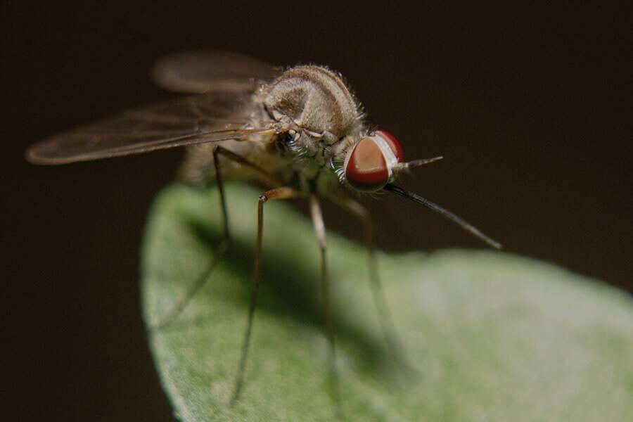 Какими средствами избавиться от комаров на даче