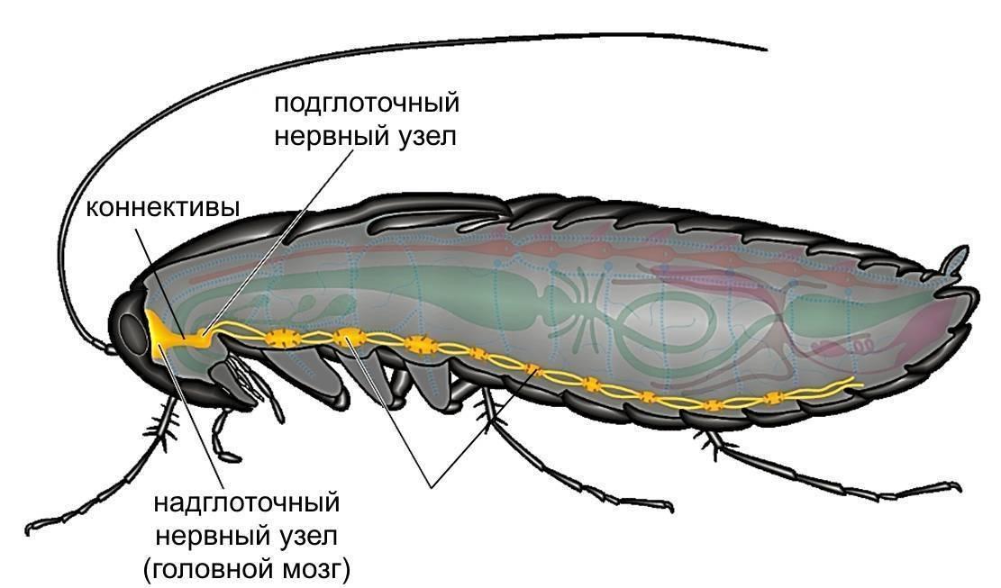 Аквафумигатор от тараканов и насекомых