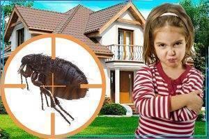 Выпроваживаем незваных гостей или как быстро избавиться от блох в доме или квартире