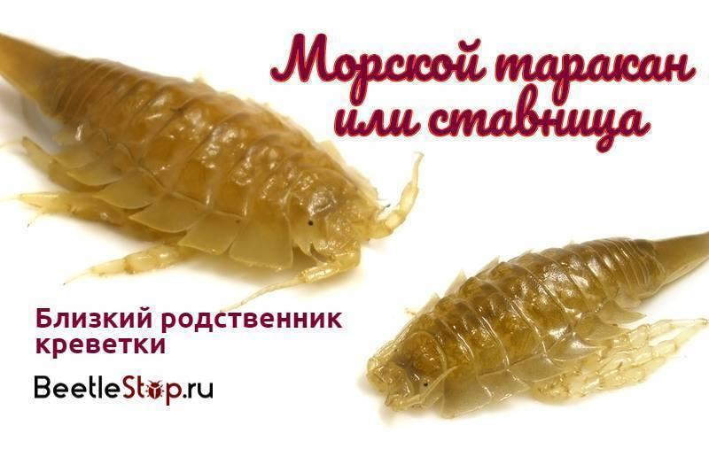 Каких видов бывают тараканы?
