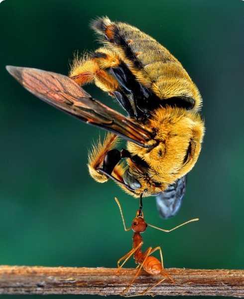 Как бороться с пчелами