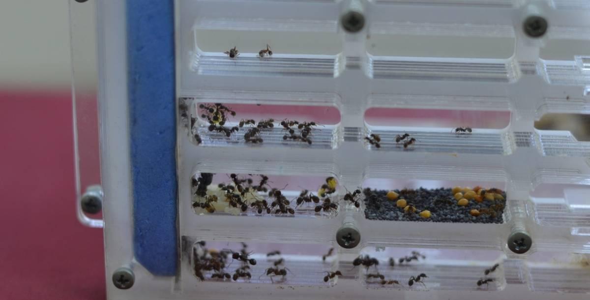 Чем питаются муравьи в домашних условиях и в природе?