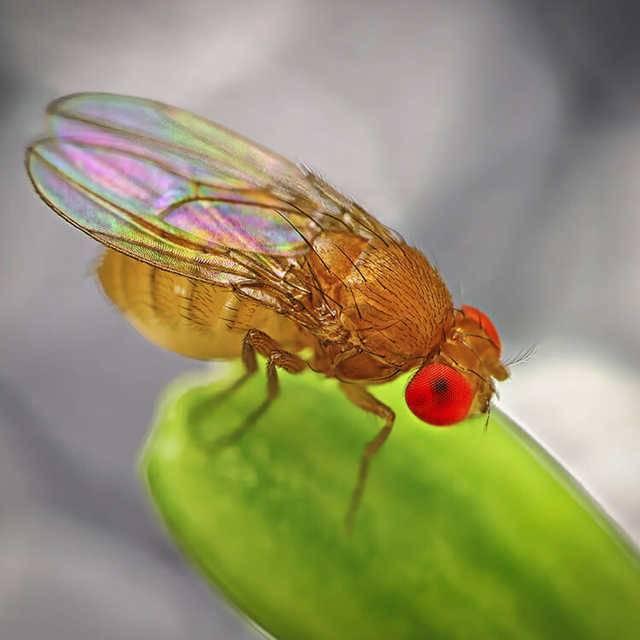 Как избавиться от мошек в цветочных горшках: самые эффективные средства