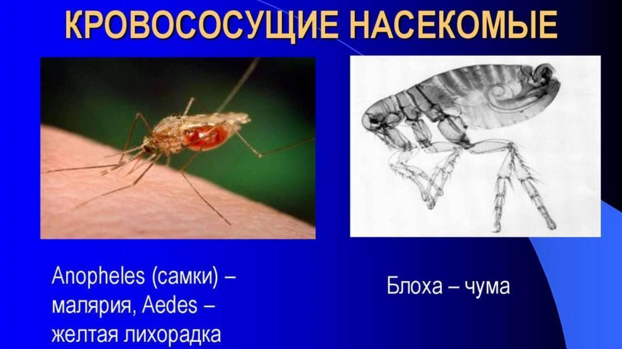 Красивая, но очень опасная бабочка-боярышница: описание и фото