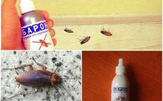 Средство от тараканов барон на сколько он эффективен